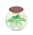 A Jar of Pickled Kohlrabi with Malt Vinegar vector image