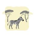 Zebra between savanna trees vector image