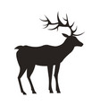 medium-sized adult male deer colorless black icon vector image