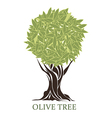 logo olive tree vector image vector image