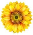 Sunflower realistic EPS 10 vector image