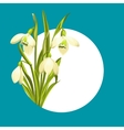 Snowdrop flowers vector image vector image