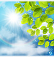 green leaves on sky background vector image