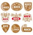 paddy grain organic rice labels healthy food vector image