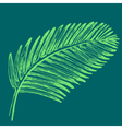 Palm leaves  Tropical jungle plant vector image vector image