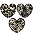 Heart with animal skin vector image