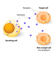 target cell vector image vector image