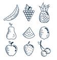 set fresh fruits handmade drawn vector image