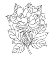 PeonyColoring book page for adults Hand vector image