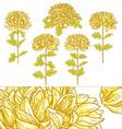 set of 5 chrysanthemum flower vector image