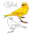 yellow canary bird vector image