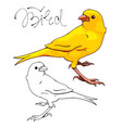 yellow canary bird vector image