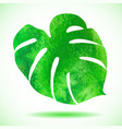 Watercolor leaf of tropical plant - Monstera vector image