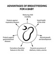 advantages of breastfeeding for an infant vector image