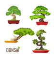 set of bonsai japanese trees grown in containers vector image