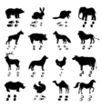 Animals Silhouettes And Tracks Set vector image