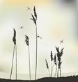 Dragonflys Landscape view Reeds vector image vector image
