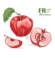 red apple isolated on white background fruit vector image