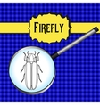 insect in magnifier Firefly beetle Lampyridae vector image