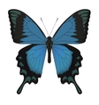 Butterfly isolated on white vector image
