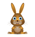 bunny rabbit vector image