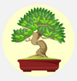 bonsai japanese art form using trees grown in vector image