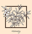 hand drawn rosemary vector image