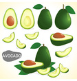 Set of avocado in various styles vector image
