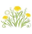 Dandelion meadow spring vector image vector image