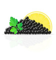 caviar 04 vector image