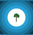 isolated garden flat icon evergreen vector image