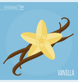vanilla flat design icon vector image