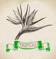 Hand drawn sketch tropical plants vintage vector image