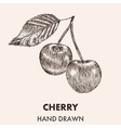 Sketch cherry Hand drawn Fruit collection vector image