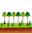 forest icon image vector image