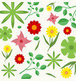 various flowers and leaves in spring background vector image