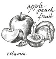 apple and peach fruit group set hand drawn vector image vector image