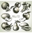 Hand drawn sketch fruit set Eco foods vector image