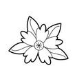 crocus flower natural leaves foliage ornament vector image