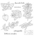 plant ashwagandha vector image