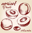 apricot fruit set hand drawn vector image vector image