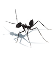 Ant with shadow isolated vector image