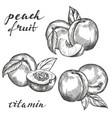 fruit peach set hand drawn vector image