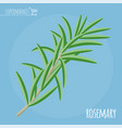 rosemary flat design icon vector image