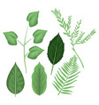 white background with different types leaves and vector image