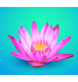 Water lily flower vector image vector image