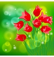 card with red tulips on light green bokeh vector image