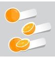 oranges vector image