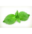 Basil leaves vector image