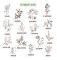 astringent herbs hand drawn set vector image